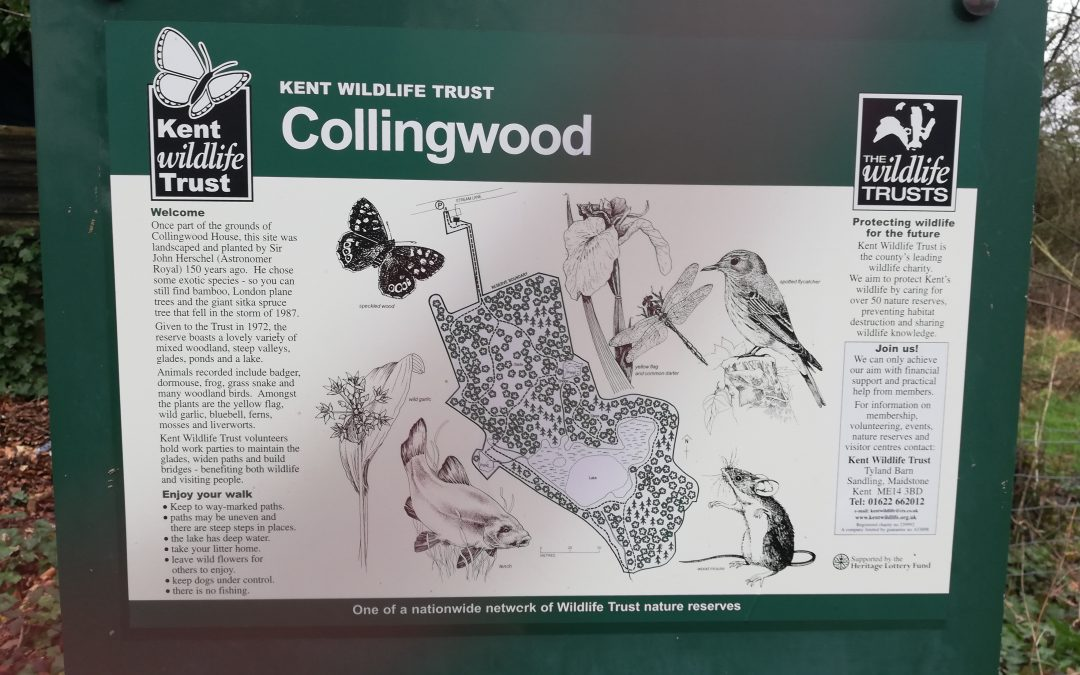 Collingwood Nature reserve